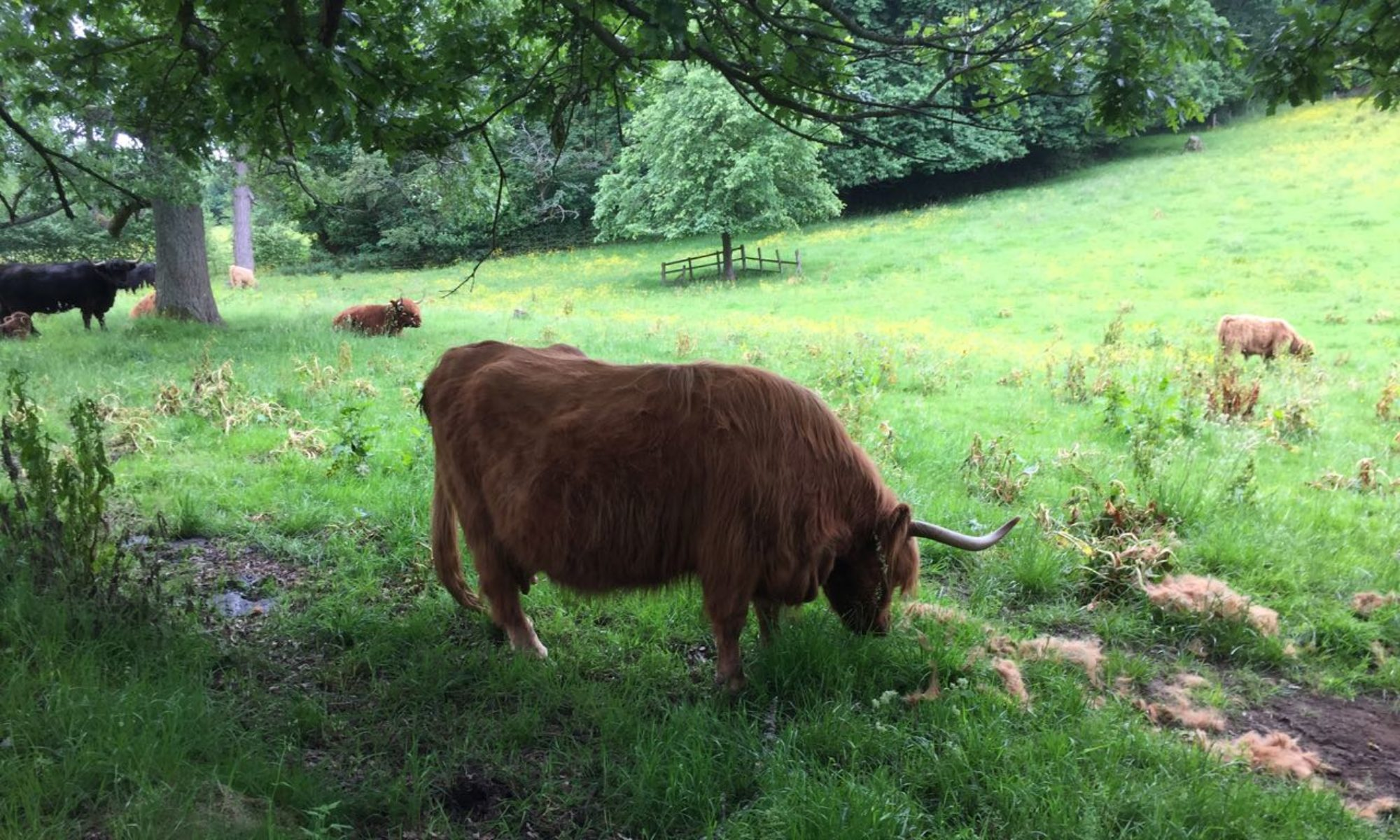 Friends of Pollok country park